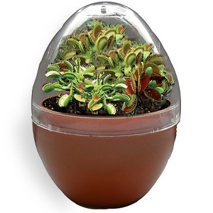 Gag Gifts - Grow Your Own Venus Fly Trap